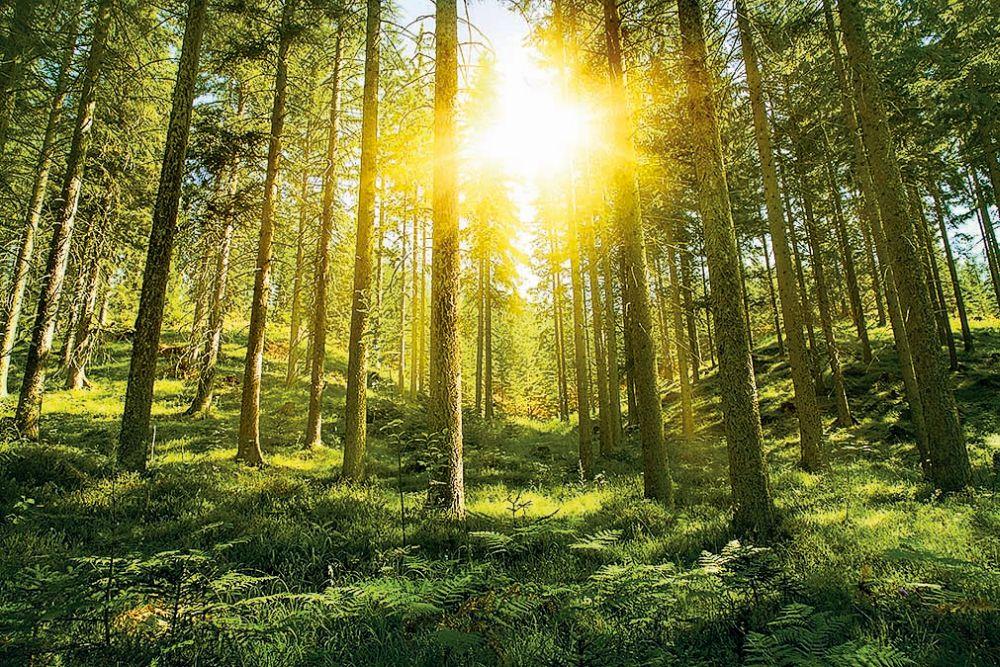 Ten zákaz v lese jsme měli poslechnout